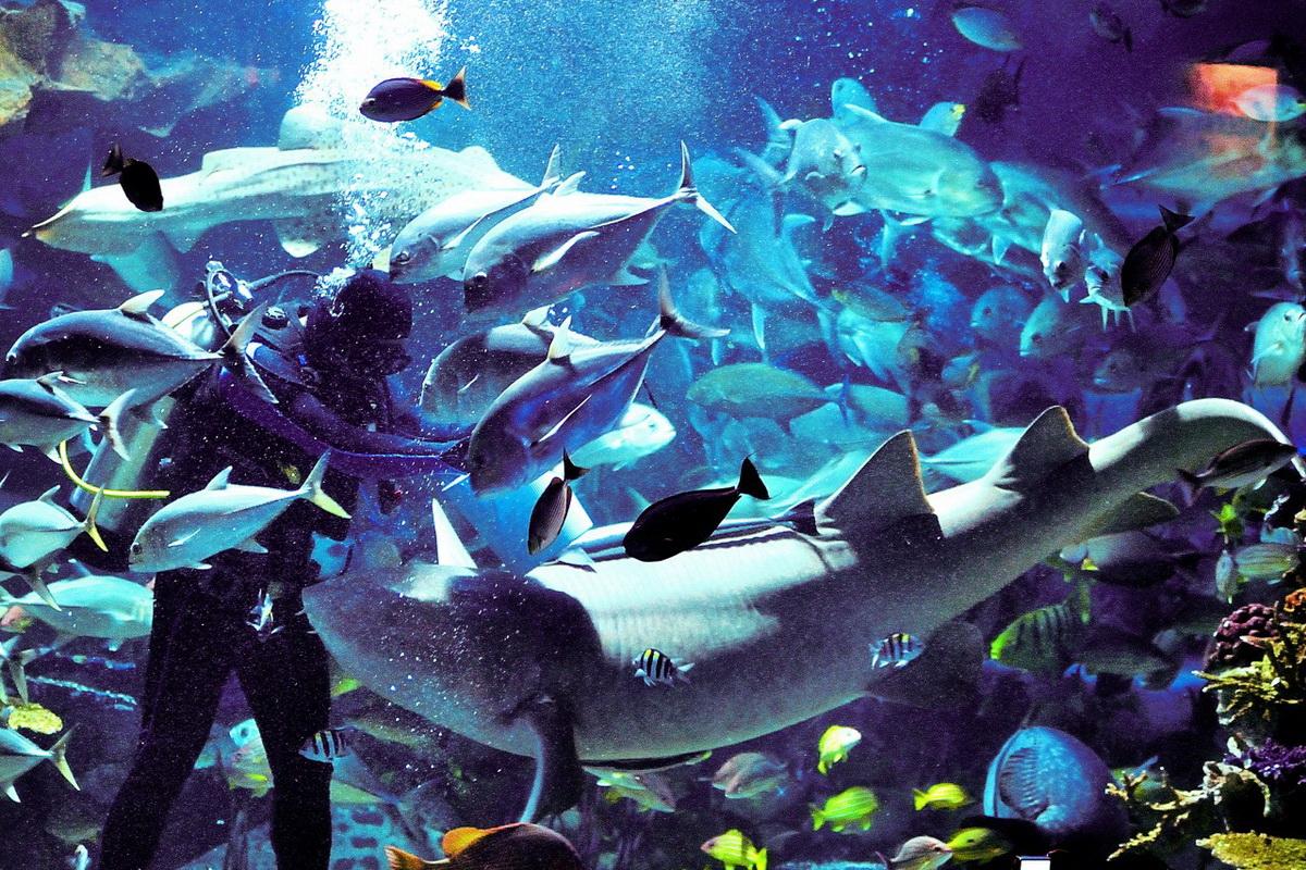 chiangmai zoo, chiang mai zoo, attractions in chiang mai